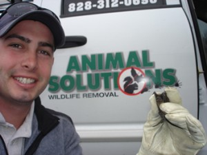 Mooresville NC Animal Removal