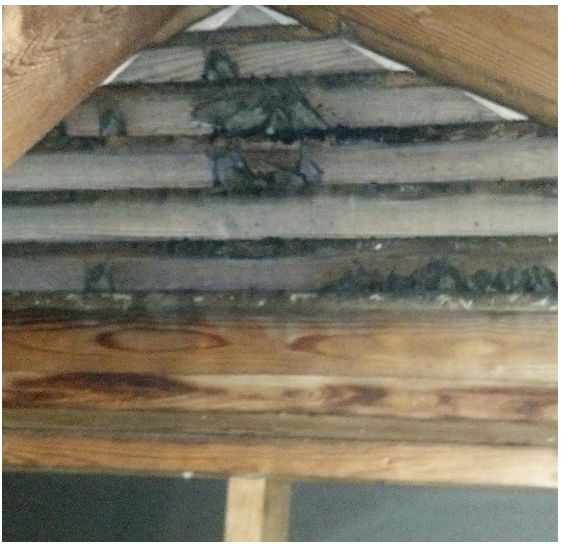 Bats In The Attic In Mooresville Bat Removal