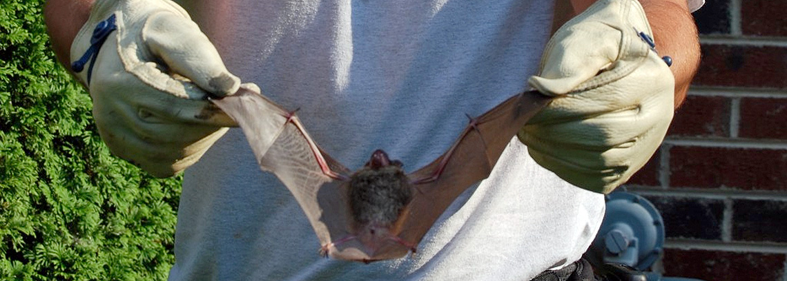 Evicting Those Bats in the Attic